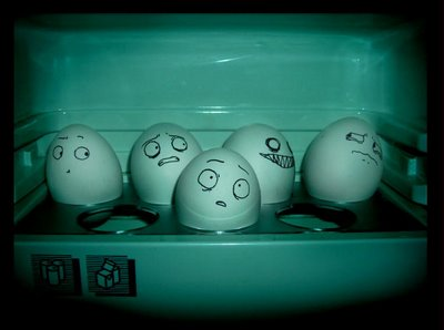 eggs in the fridge or not