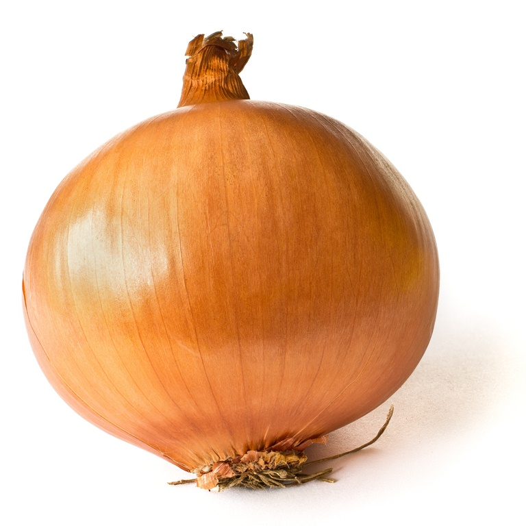 how to know when brown onions are ready to harvest