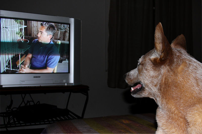 800px-Dog_tv source: https://commons.wikimedia.org/wiki/File:Dog_tv.jpg